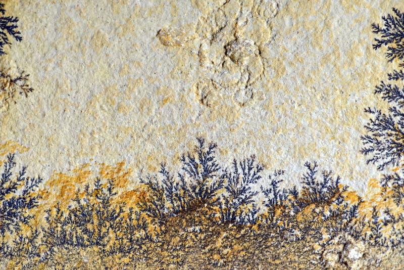Ο δενδρίτης στο βράχο ασβεστόλιθων στοκ φωτογραφία με δικαίωμα ελεύθερης χρήσης