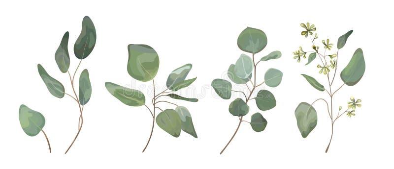 Ο ευκάλυπτος έσπειρε την ασημένια τέχνη σχεδιαστών φύλλων δέντρων δολαρίων, foliag διανυσματική απεικόνιση
