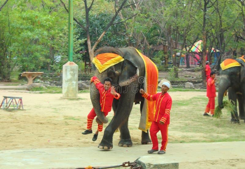 Ο ελέφαντας παρουσιάζει στοκ εικόνες με δικαίωμα ελεύθερης χρήσης