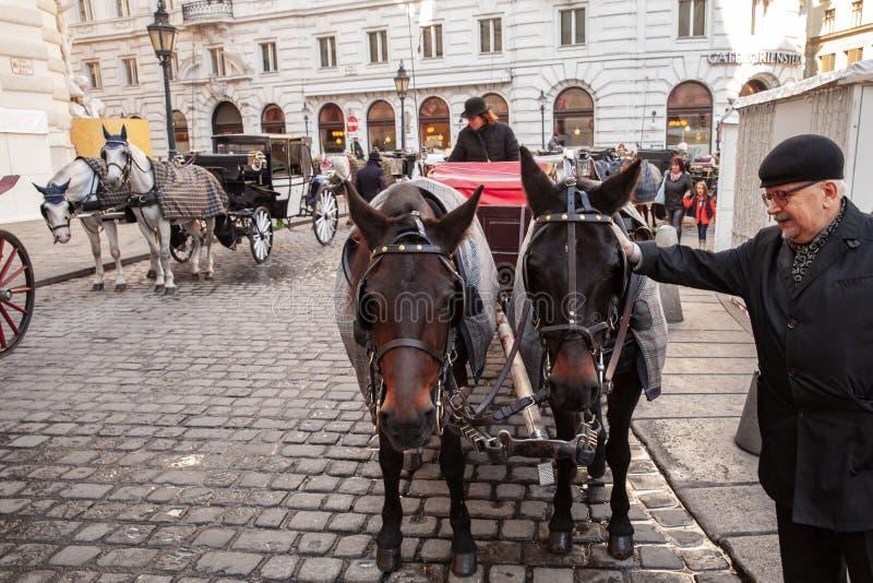 Ο ηληκιωμένος κτυπά τα άλογα, Βιέννη στοκ εικόνες