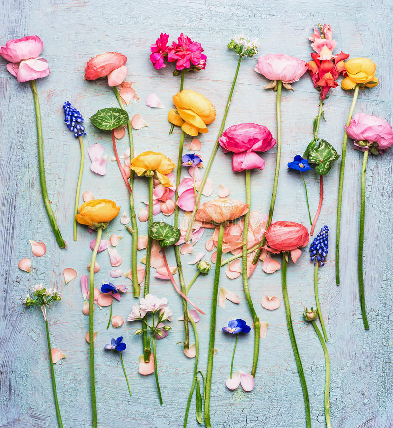 Ο θερινός ζωηρόχρωμος όμορφος κήπος ανθίζει την επιλογή στο μπλε τυρκουάζ shabby κομψό υπόβαθρο, τοπ άποψη στοκ εικόνες με δικαίωμα ελεύθερης χρήσης