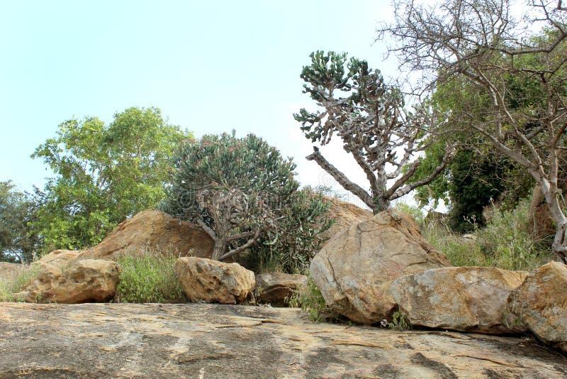Ο ινδικός κάκτος με τους βράχους λόφων με το τοπίο ουρανού στοκ εικόνες