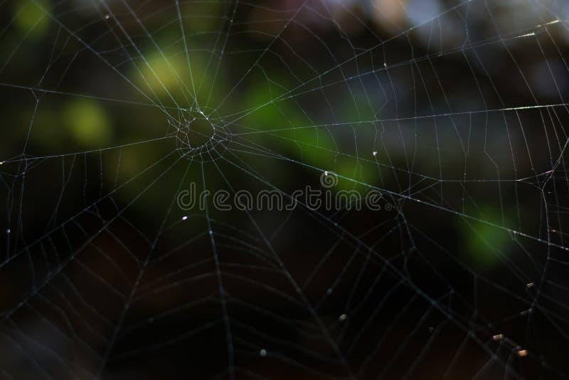 Ο ιστός αράχνης βρίσκεται στα βουνά στοκ εικόνες