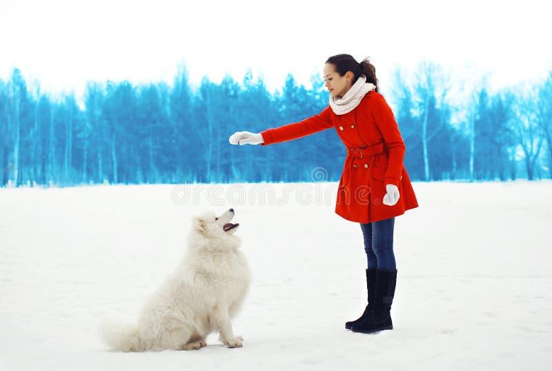 Ο ιδιοκτήτης γυναικών εκπαιδεύει το άσπρο σκυλί Samoyed υπαίθρια το χειμώνα στοκ φωτογραφίες με δικαίωμα ελεύθερης χρήσης