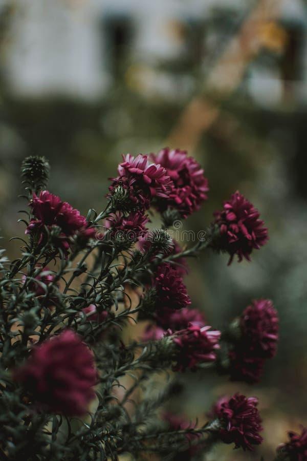 Ο κάθετος εκλεκτικός πυροβολισμός εστίασης της πορφύρας τα λουλούδια με το θολωμένο φυσικό υπόβαθρο στοκ εικόνες με δικαίωμα ελεύθερης χρήσης