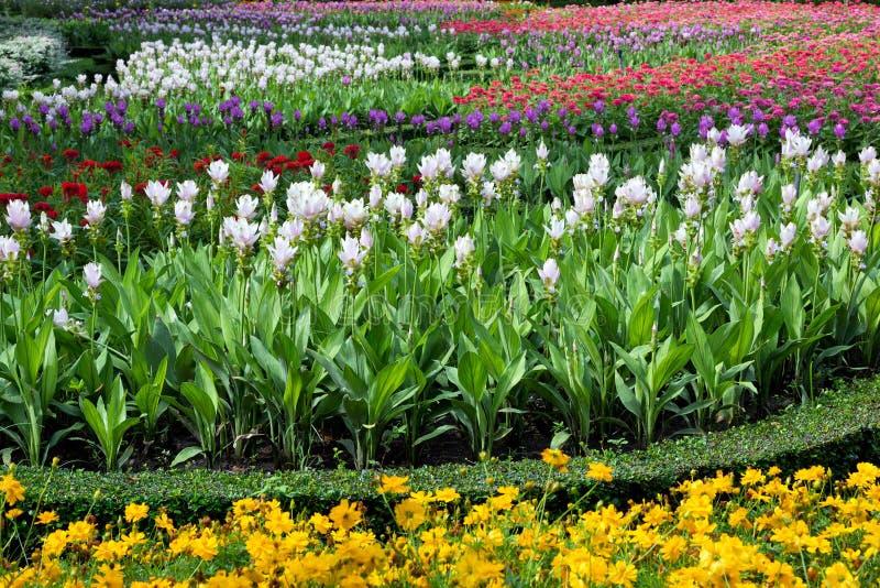 Ο κάθετος κήπος στο πάρκο στοκ φωτογραφία