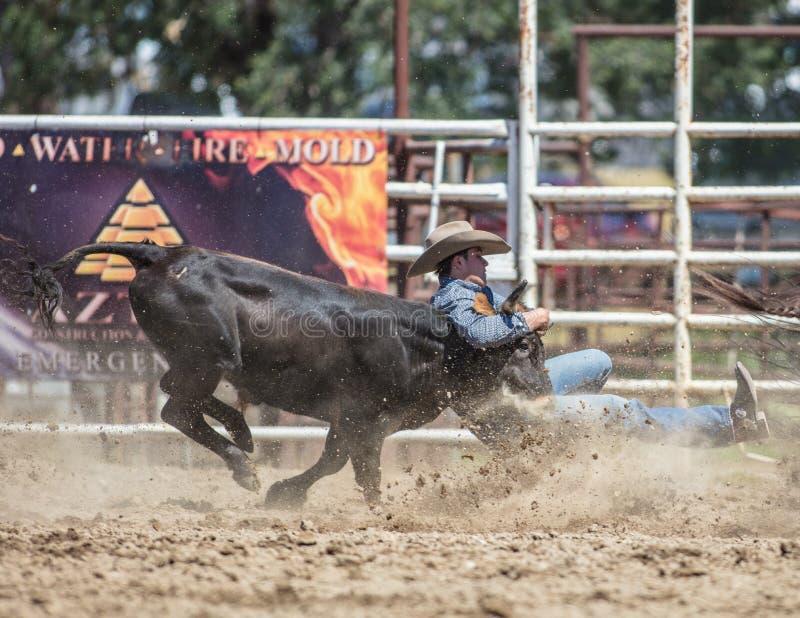 Ο κάουμποϋ έχει τον ταύρο του στοκ φωτογραφία με δικαίωμα ελεύθερης χρήσης