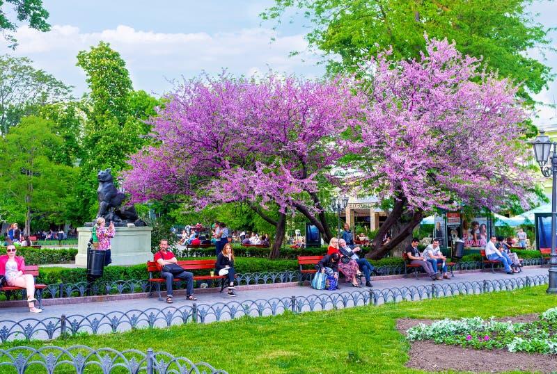 Ο κήπος πόλεων στοκ εικόνες