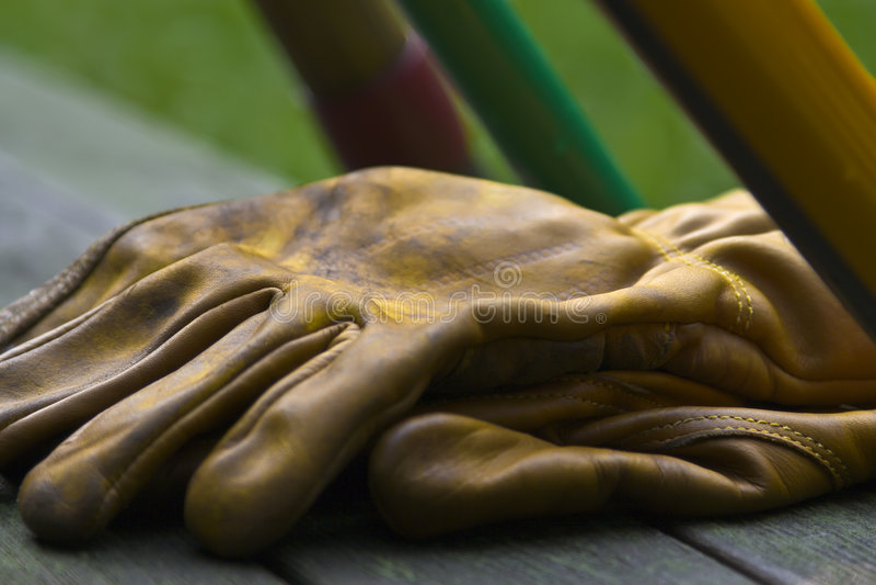 ο κήπος φορά γάντια στα ερ&gam στοκ φωτογραφία με δικαίωμα ελεύθερης χρήσης