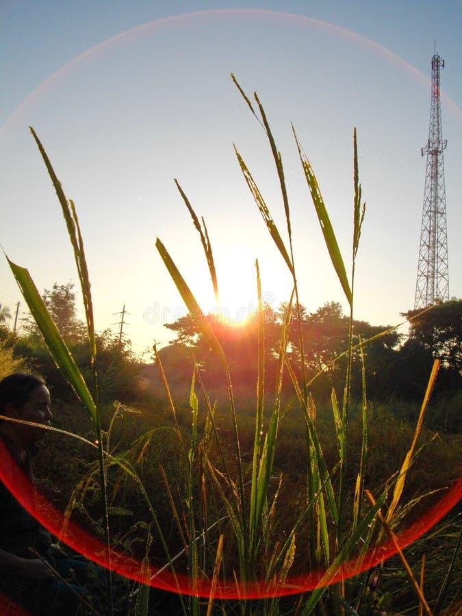 Ο κίτρινος ήλιος είναι τομέας στοκ φωτογραφία με δικαίωμα ελεύθερης χρήσης