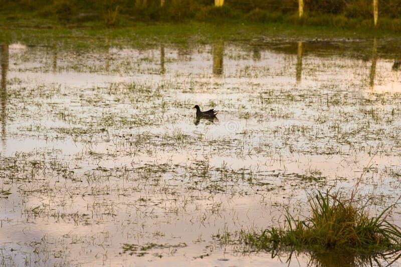 Ο καθρέφτης της λίμνης στο τέλος του απογεύματος στοκ εικόνες με δικαίωμα ελεύθερης χρήσης