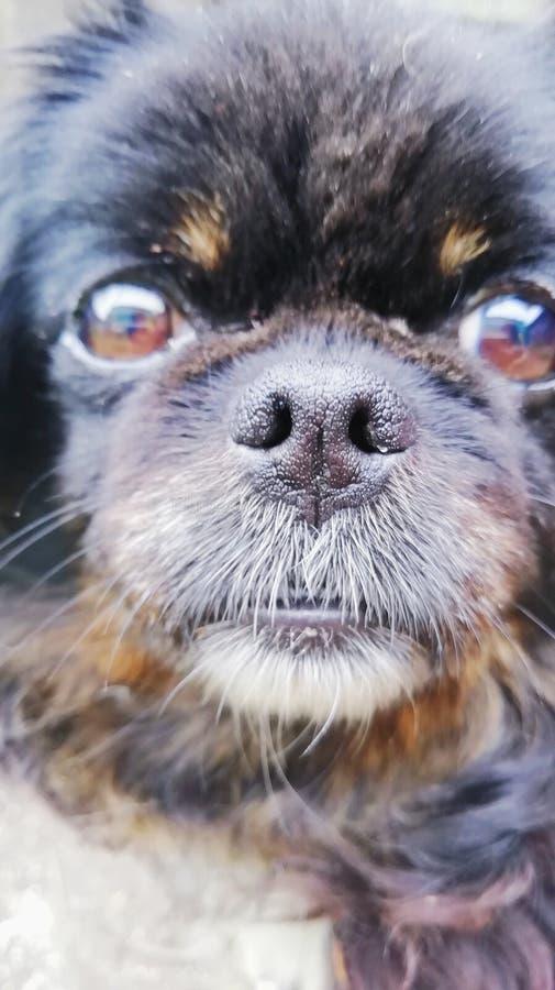 Ο καλύτερος φίλος μου αυτό το σκυλί μου Businka στοκ εικόνα