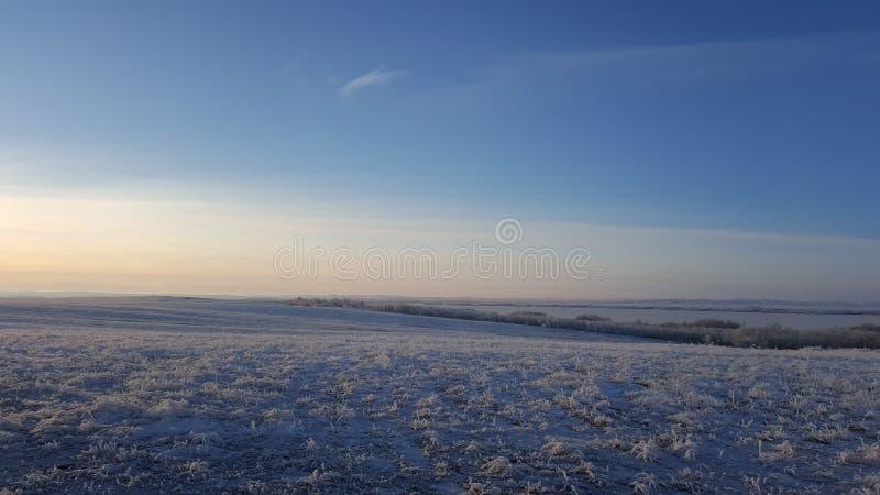 Ο καταπληκτικός βαθύς μπλε ουρανός με cirrus φτερό-που διαμορφώνονται καλύπτει πέρα από το ξηρό λιβάδι - υπόβαθρο φύσης Cirrus σύ στοκ φωτογραφία με δικαίωμα ελεύθερης χρήσης