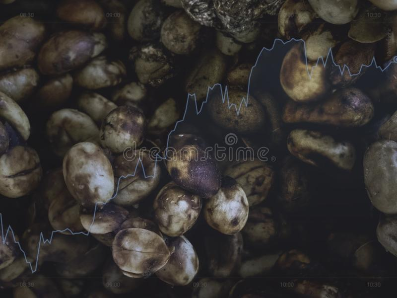 Ο καφές μοσχογαλών έψησε το χρώμα τσαγιού φασολιών και τη μαύρη επιχείρηση πώλησης προϊόντων χρώματος επάνω και μεγαλώνει της Ταϊ στοκ φωτογραφίες