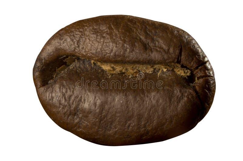 ο καφές φασολιών απομόνωσ κλείστε επάνω στοκ εικόνα