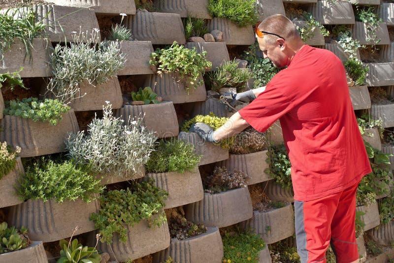 Ο κηπουρός στηρίζεται λουλούδια στη διατήρηση του συμπαγούς τοίχου στοκ φωτογραφίες