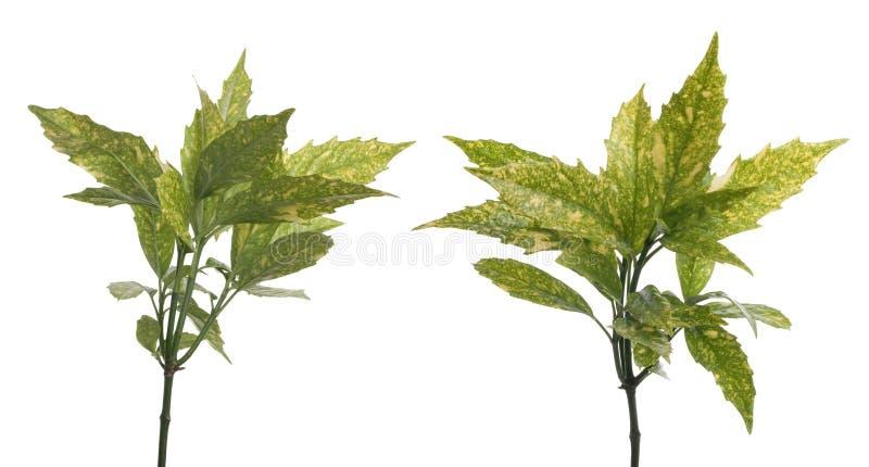ο κλάδος πράσινος βγάζε&iota στοκ εικόνες