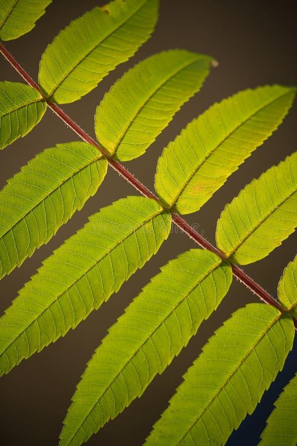 ο κλάδος πράσινος βγάζε&iota στοκ φωτογραφία με δικαίωμα ελεύθερης χρήσης