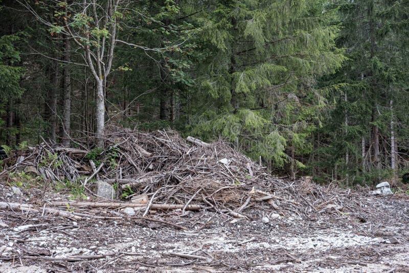 ο κορμός δέντρων περικοπών πριονιών με το έτος χτυπά και είδε τη σκόνη στοκ φωτογραφία με δικαίωμα ελεύθερης χρήσης