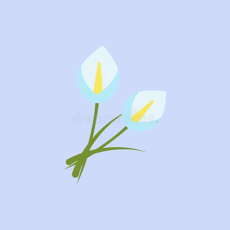 Ο κρίνος της Calla ανθίζει το άσπρο εικονίδιο χρώματος Στοιχείο του χρωματισμένου όμορφου εικονιδίου λουλουδιών για την κινητούς  απεικόνιση αποθεμάτων