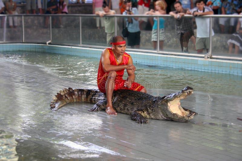 ο κροκόδειλος εμφανίζ&epsilo στοκ εικόνες