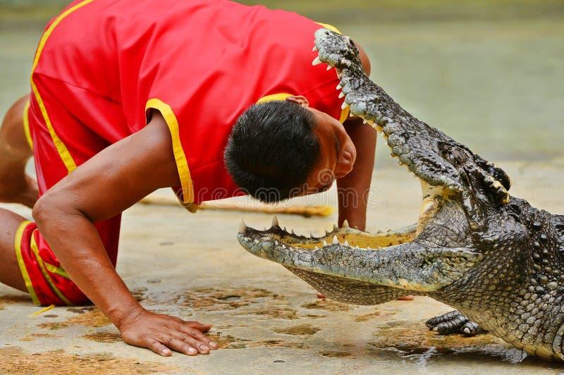 Ο κροκόδειλος παρουσιάζει στοκ εικόνα με δικαίωμα ελεύθερης χρήσης