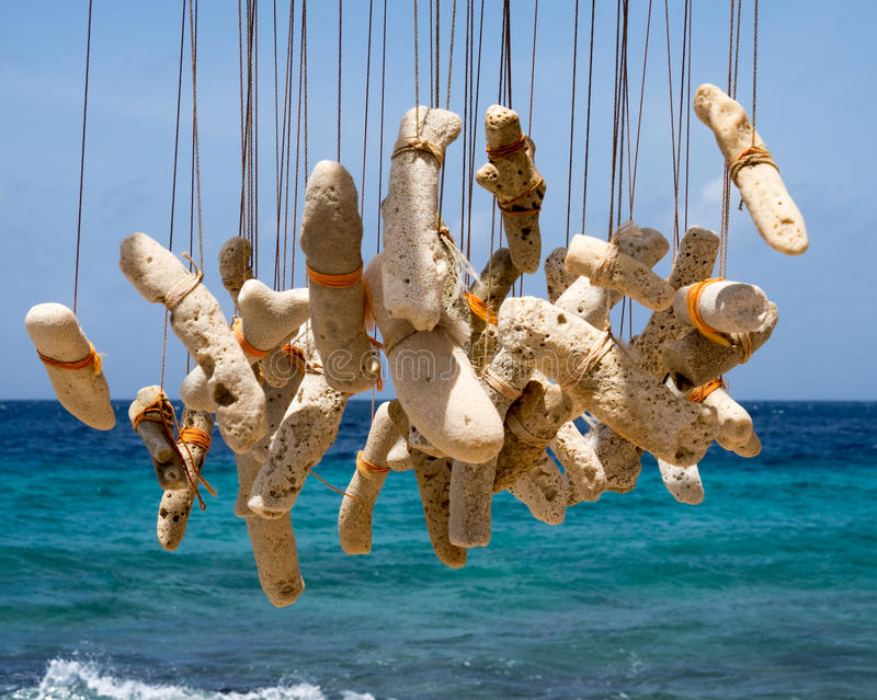 Ο κτύπος αέρα κοραλλιών ακροθαλασσιών στοκ φωτογραφίες
