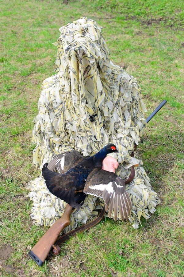 Ο κυνηγός στην κάλυψη με ένα πυροβόλο όπλο κρατά τον αγριόγαλλο στοκ εικόνες