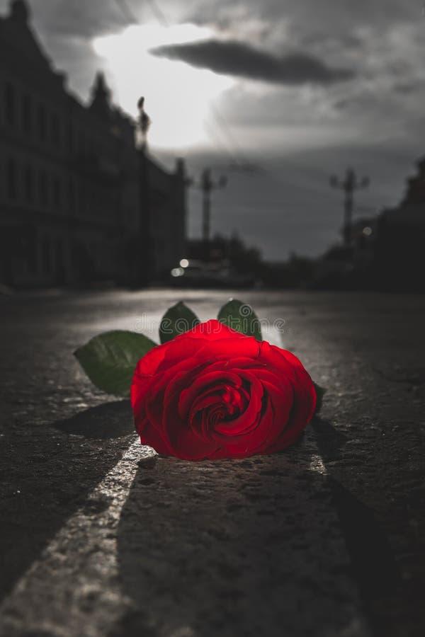 ο κόκκινος δρόμος αυξήθη&k στοκ εικόνα