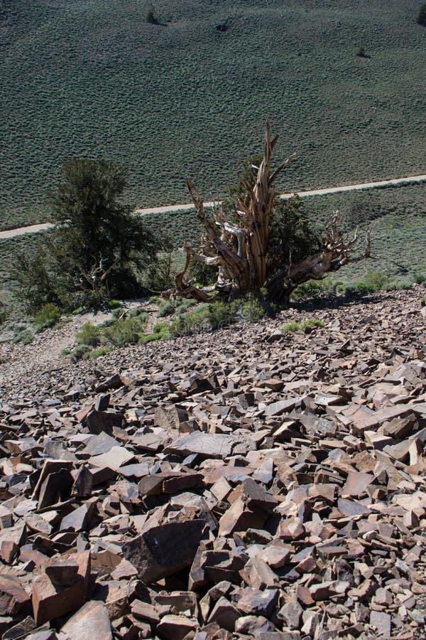 Ο κόκκινος ωκεάνειος βράχος αγνοεί τα άσπρα βουνά σε Καλιφόρνια Βρώμικος δρόμος κατωτέρω, άποψη πορτρέτου στοκ φωτογραφία