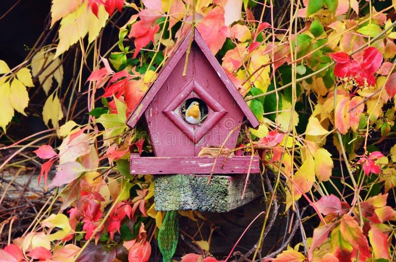Ο κόκκινος Robin στο σπίτι πουλιών στοκ εικόνα
