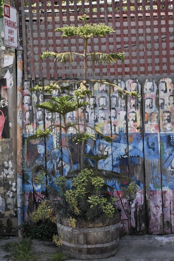 Ο κόσμος του Σαν Φρανσίσκο ` s αναγνώρισε τις βαλσαμώδεις τοιχογραφίες αλεών, 33 στοκ εικόνες