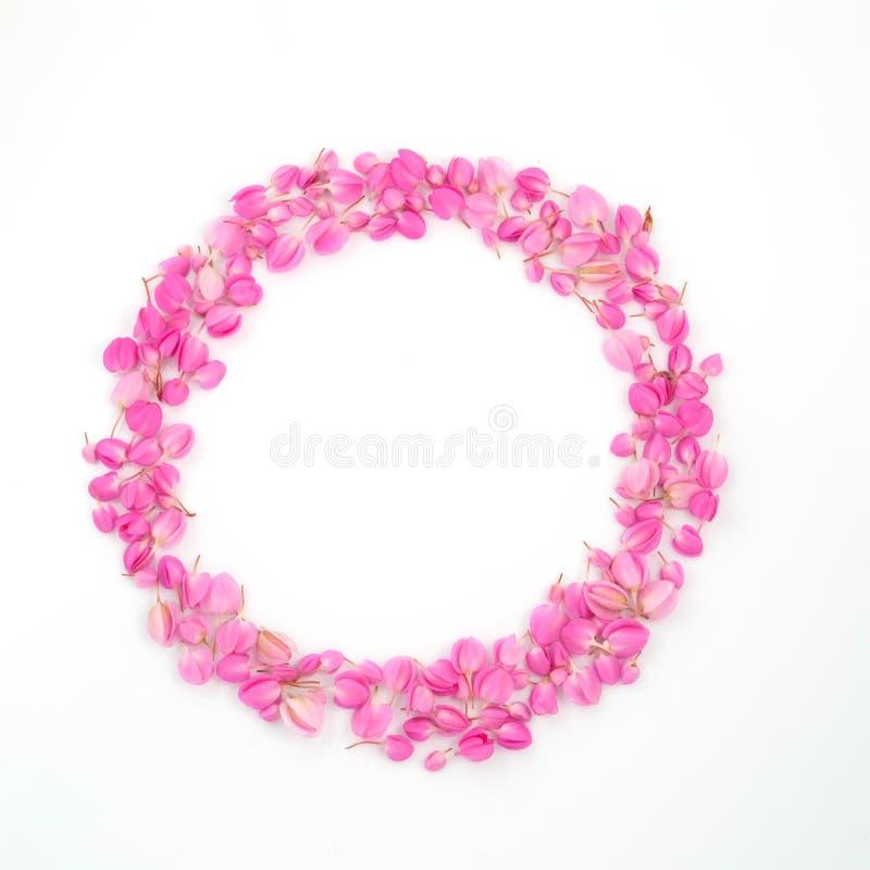ο κύκλος ανθίζει το ροζ πλαισίων στοκ εικόνες