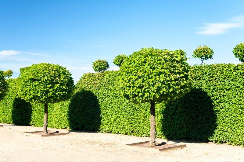 Ο κύκλος διαμόρφωσε τα topiary πράσινα δέντρα βασιλικό διακοσμητικό gar Rundale στοκ εικόνα με δικαίωμα ελεύθερης χρήσης
