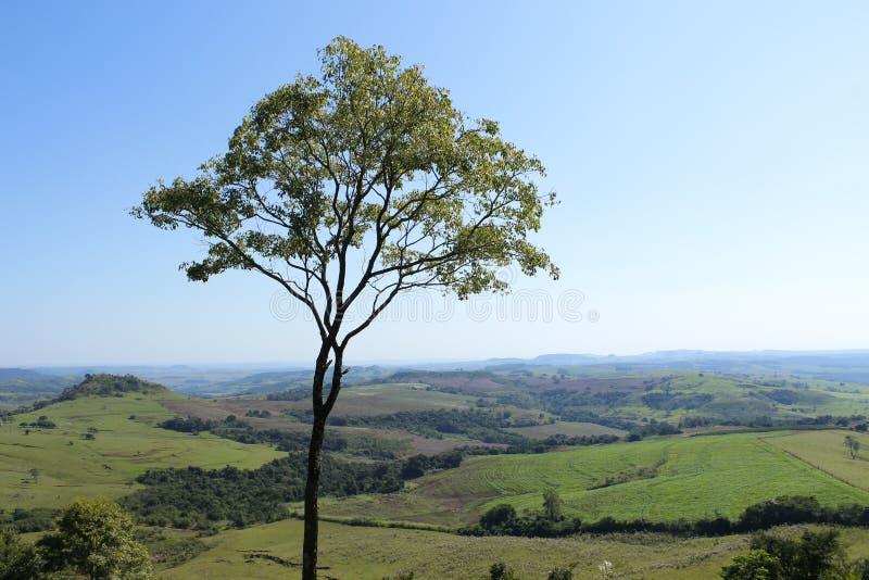 Ο μαγικός των βουνών και το δέντρο της ζωής στοκ φωτογραφία με δικαίωμα ελεύθερης χρήσης