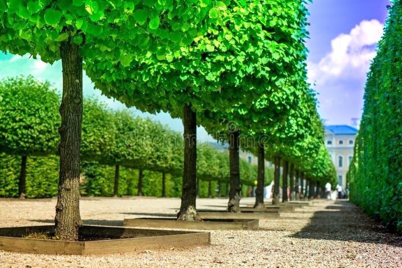 Ο μακρο πυροβολισμός του φωτεινού πράσινου, που καλλιεργείται η σειρά δέντρων στο πάρκο, βοτανικός κήπος μπροστά από το κάστρο στοκ εικόνα