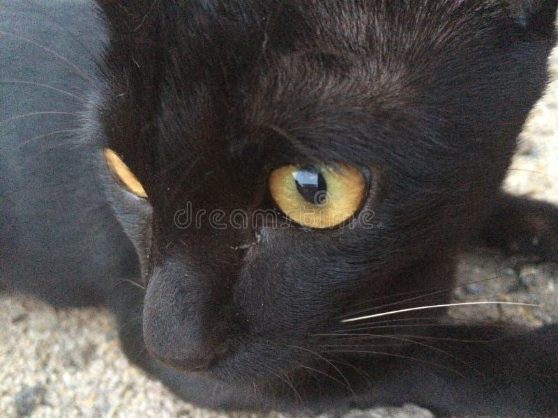 Ο Μαύρος γατών στοκ φωτογραφία