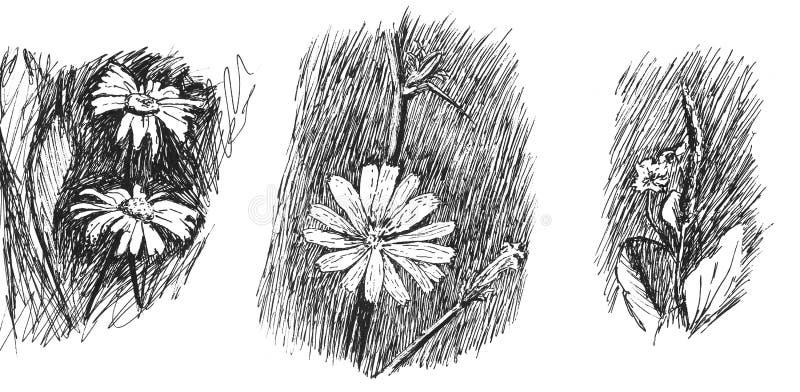 Ο Μαύρος λουλουδιών και wight διανυσματική απεικόνιση