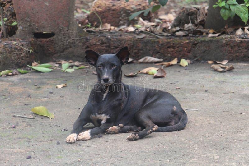 Ο Μαύρος σκυλιών στοκ φωτογραφία με δικαίωμα ελεύθερης χρήσης