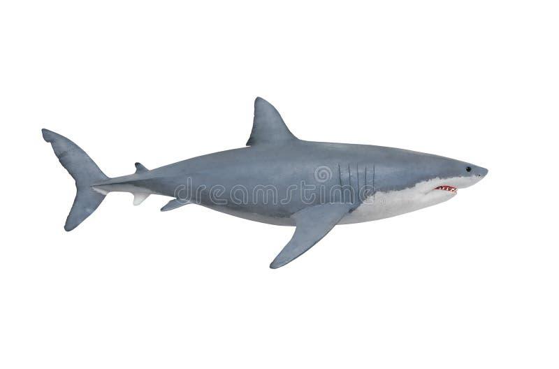 Ο μεγάλος άσπρος καρχαρίας στοκ εικόνες