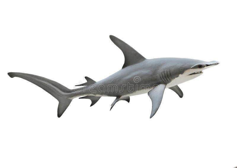 Ο μεγάλος καρχαρίας Hammerhead στοκ εικόνες