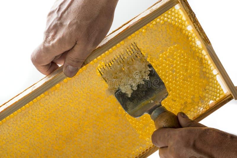 Ο μελισσοκόμος εκπωματίζει την κηρήθρα στοκ φωτογραφία