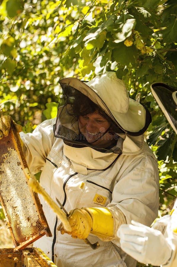 Ο μελισσοκόμος εργάζεται με τις μέλισσες στοκ εικόνες με δικαίωμα ελεύθερης χρήσης