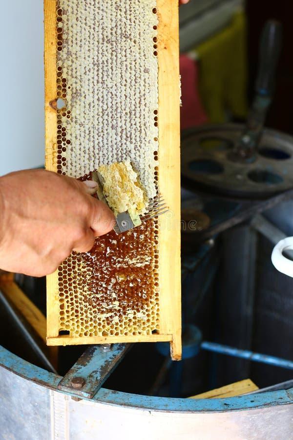 Ο μελισσοκόμος κινηματογραφήσεων σε πρώτο πλάνο εκπωματίζει την κηρήθρα με την εκπωμάτιση του δικράνου Έννοια μελισσοκομίας Αυθεν στοκ εικόνες με δικαίωμα ελεύθερης χρήσης