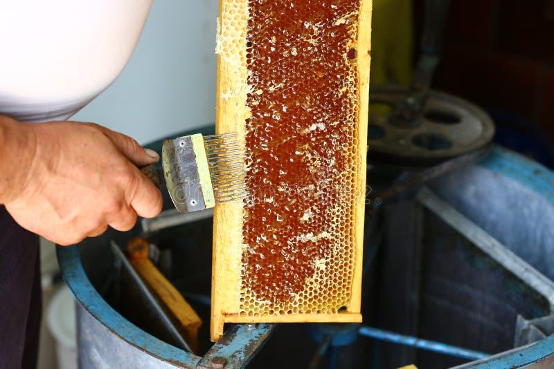Ο μελισσοκόμος κινηματογραφήσεων σε πρώτο πλάνο εκπωματίζει την κηρήθρα με την εκπωμάτιση του δικράνου Έννοια μελισσοκομίας Αυθεν στοκ φωτογραφίες