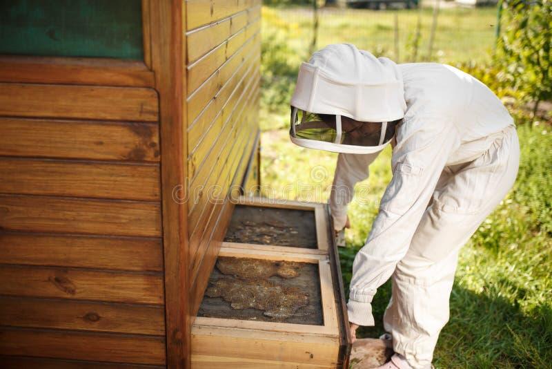 Ο μελισσοκόμος στο κοστούμι εργάζεται στο μελισσουργείο Ανοίγοντας ξύλινη έννοια μελισσοκομίας κυψελών στοκ εικόνες