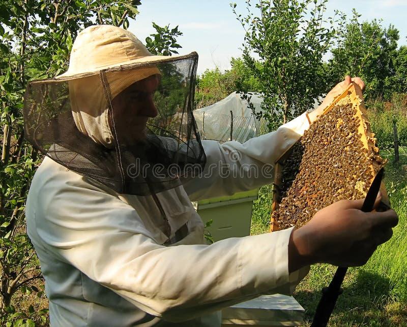 Ο μελισσοκόμος και το πλαίσιο με τις μέλισσες στοκ εικόνες με δικαίωμα ελεύθερης χρήσης