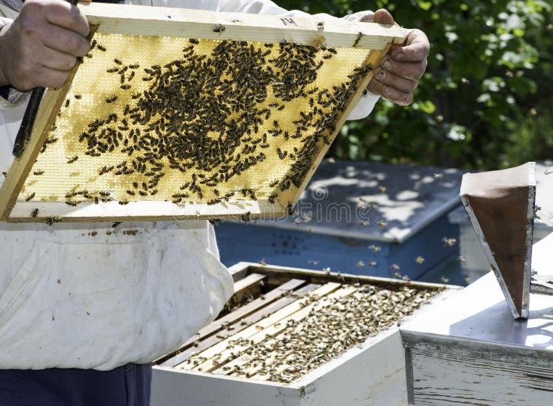 Ο μελισσοκόμος φαίνεται κηρήθρες στοκ εικόνες