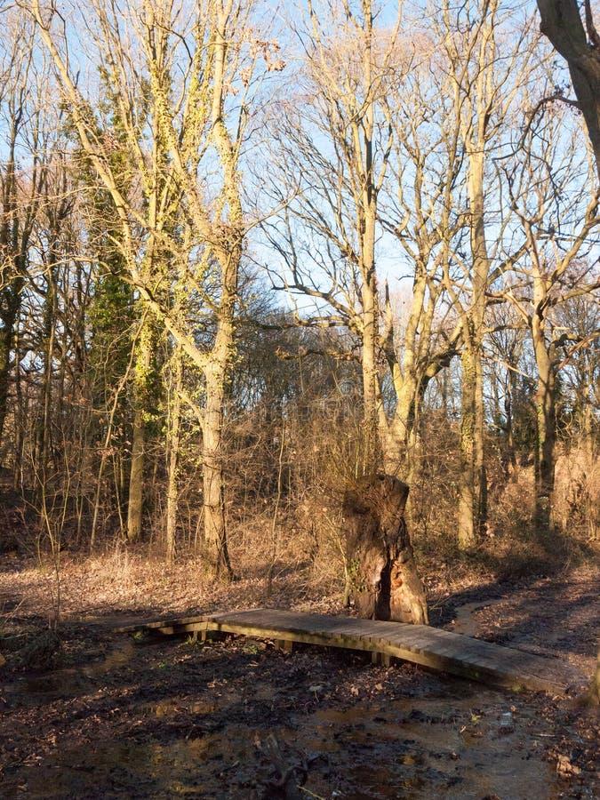ο μικρός ξύλινος τρόπος σανίδων πορειών πέρα από το τρέξιμο τρίζει του νερού στο woodl στοκ εικόνες