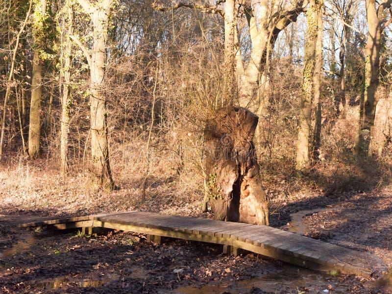 ο μικρός ξύλινος τρόπος σανίδων πορειών πέρα από το τρέξιμο τρίζει του νερού στο woodl στοκ φωτογραφία
